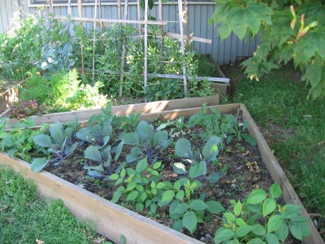 garden-may1