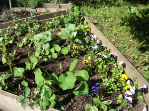 Edible Flower Bed