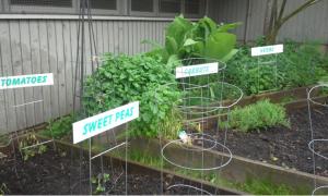 Blog photo of garden