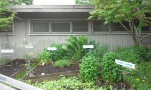 garden photo for blog