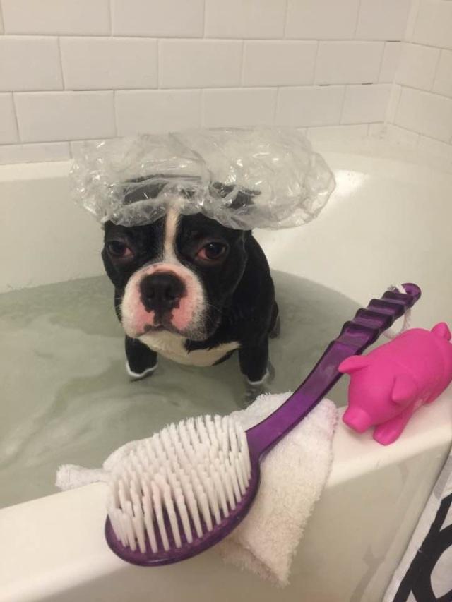 bath-time-puppy