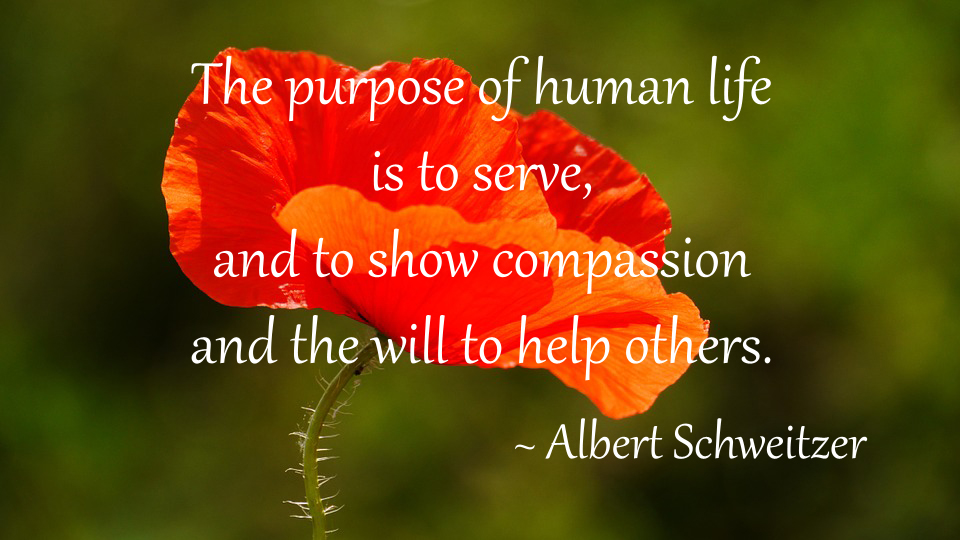 5 quotes of compassion inspired by remembrance day frog hollow albert schweitzer purpose of human life quote mightylinksfo