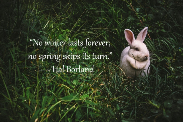 hal-borland-spring-quote-700px