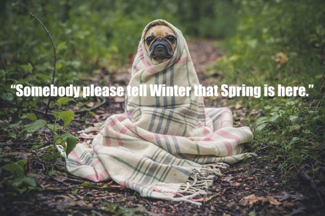 pug-please-tell-winter-humor-700px