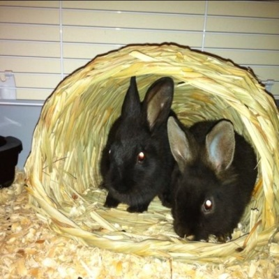velvet-and-pippin-bunnies
