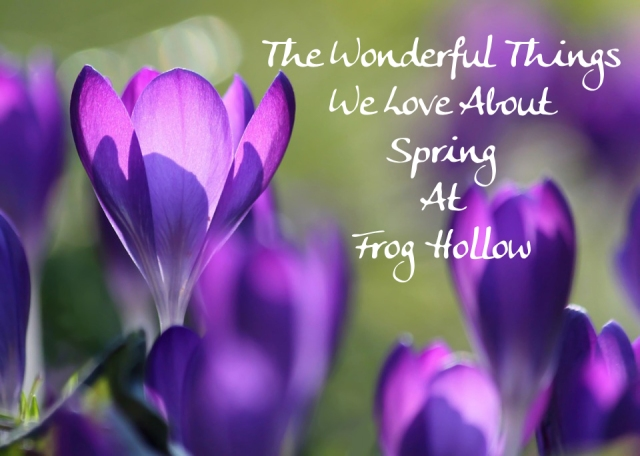 Wonderful-Things-We-Love-About-Spring-At-Frog-Hollow