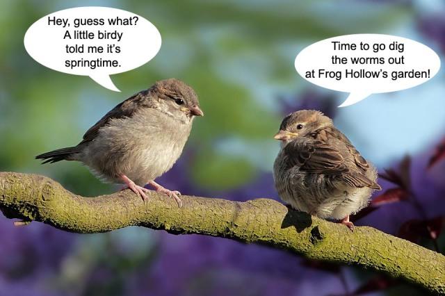 two-birds-talking-spring-2019