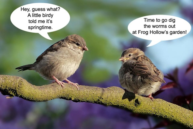 two-birds-talking-spring-2019
