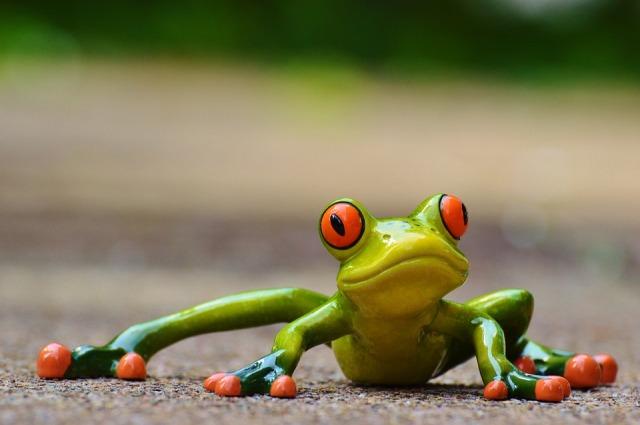 leap-year-frog-hollow-neighbourhood-house-2020